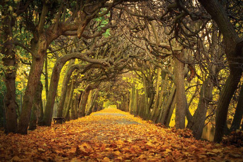 Autumn Winter Landscape Lowe Aston